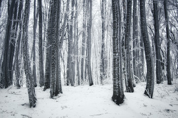 winter frost in forest
