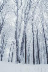 frozen tree in forest