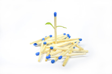 Matchstick come into leaf