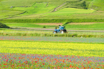 Tractor growing green spring colorful field.
