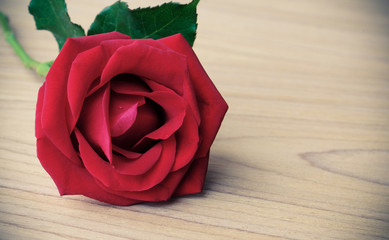 Red rose on wood background, love concept