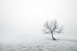 bare lonely tree in black and white - 76104289