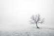 Leinwanddruck Bild - bare lonely tree in black and white