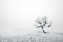 Árbol solitario desnudo en blanco y negro