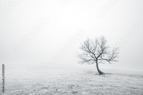 Foto op Aluminium Bergen bare lonely tree in black and white