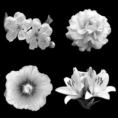 collage of black and white flowers on a black background