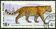 RUSSIA - 2014: shows Amur leopard, series