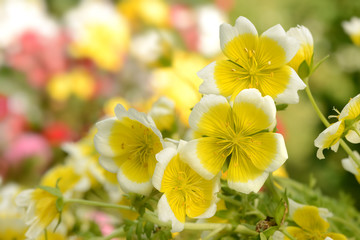 Blumen 329