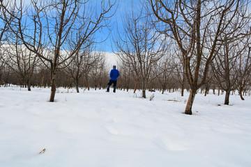 kış mevsiminde ağaçlıklar