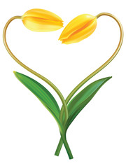 Heart from two tulips. Idea for Valentine's day. Vector illustra