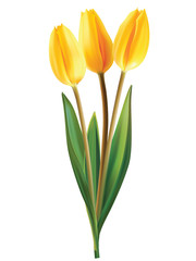 Tulip flowers isolated. Vector illustration