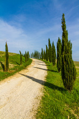 Street Among Cypresses in Tuscany-Val dOrcia,Italy