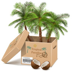 Vector Palm Tree in Box isolated on white background