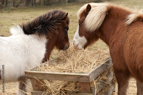 canvas print picture Horses