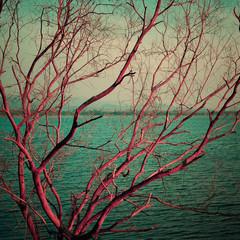 Vintage pink dry tree at lake