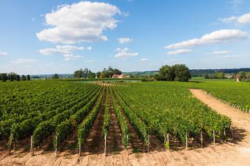 Vineyards of Saint Emilion,  France