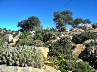 rock garden in the desert of western Sahara in Africa
