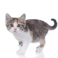 Niedliche kleine Katze