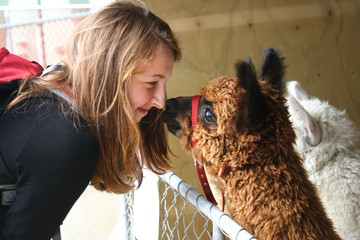Red-haired girl and an alpaca
