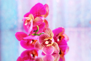 Beautiful orchid on pink background