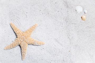Seestern und Muscheln auf hellem Sandstrand