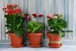 Obrazy na płótnie, fototapety, zdjęcia, fotoobrazy drukowane : Beautiful flowers in flowerpots, on wooden background