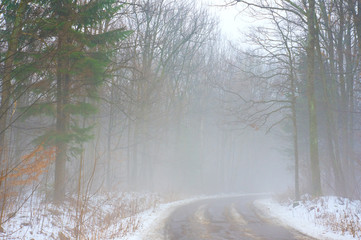 Fog on the road in the forest