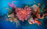 Valentine heart made of corals (Dendronephthya hemprichi)