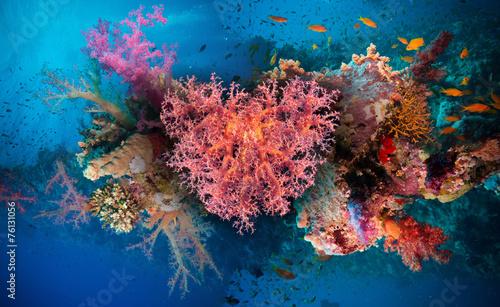 canvas print picture Valentine heart made of corals (Dendronephthya hemprichi)