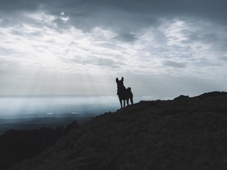 Dog silhouette in mountains