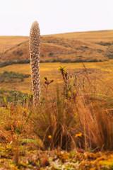 Wild cactus flower, National Park Llanganate, south america
