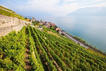 Lavaux vineyards on the shore of lake Geneva