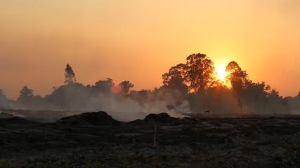 Evening scene of rice farm in Thailand , Farmer to burning rice