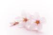 Leinwandbild Motiv 桜のイメージ
