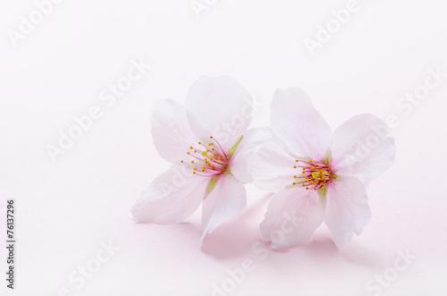 Foto op Aluminium Textures 桜のイメージ