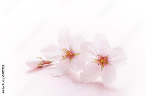 Staande foto Textures 桜のイメージ