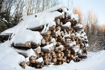 the pile of logs covered with snow