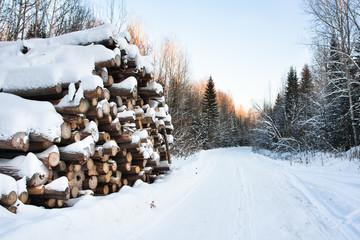 the pile of logs in winter
