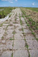 雑草が茂る道