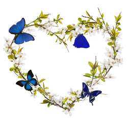 heart from cherry tree flowers and blue butterflies on white