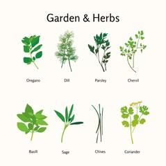 garden hearbs