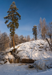 Pine tree at frozen river