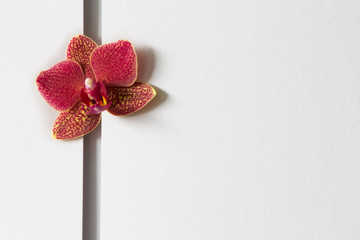 Orchideenkarte Nr. 1