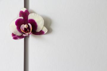 Orchideenkarte Nr. 2