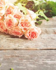 Tender Pink Roses in sunshine light, toned image
