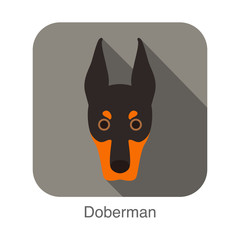 Doberman dog face flat icon, dog series
