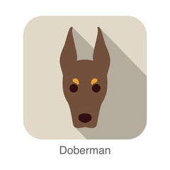 Doberman dog face flat icon, dog series