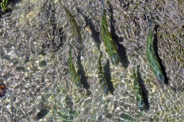 Nationalpark Krka Kroatien Fische