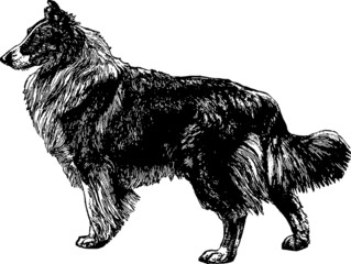 Vintage Illustration dog collie