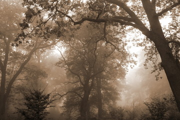 Baum im Wald